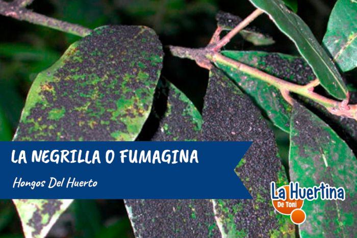 negrilla