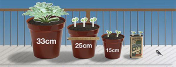 tamaño de maceta para cada hortaliza
