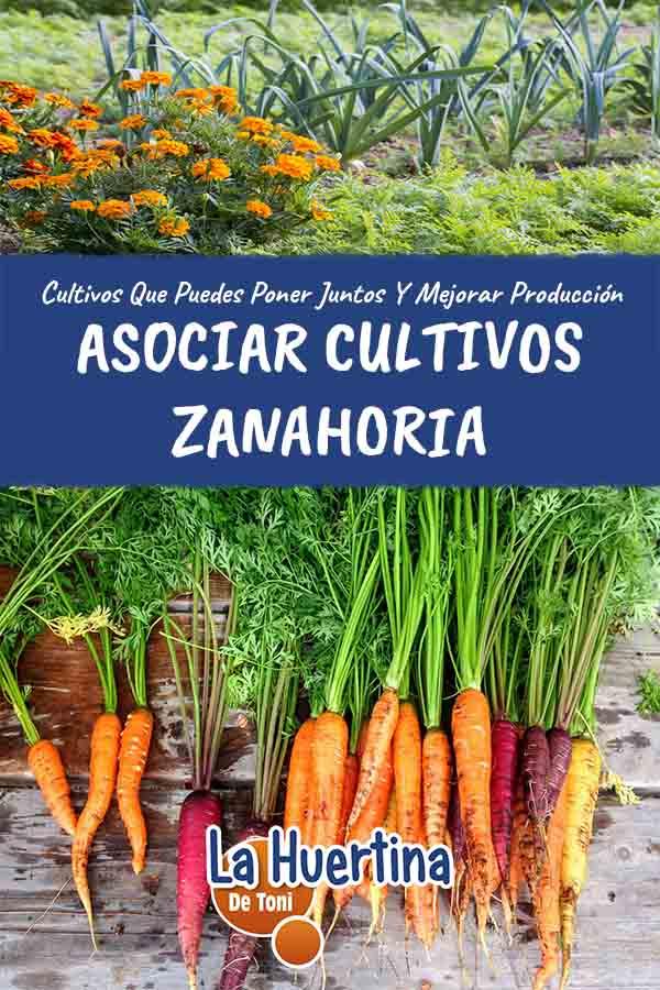 associer les cultures de carottes