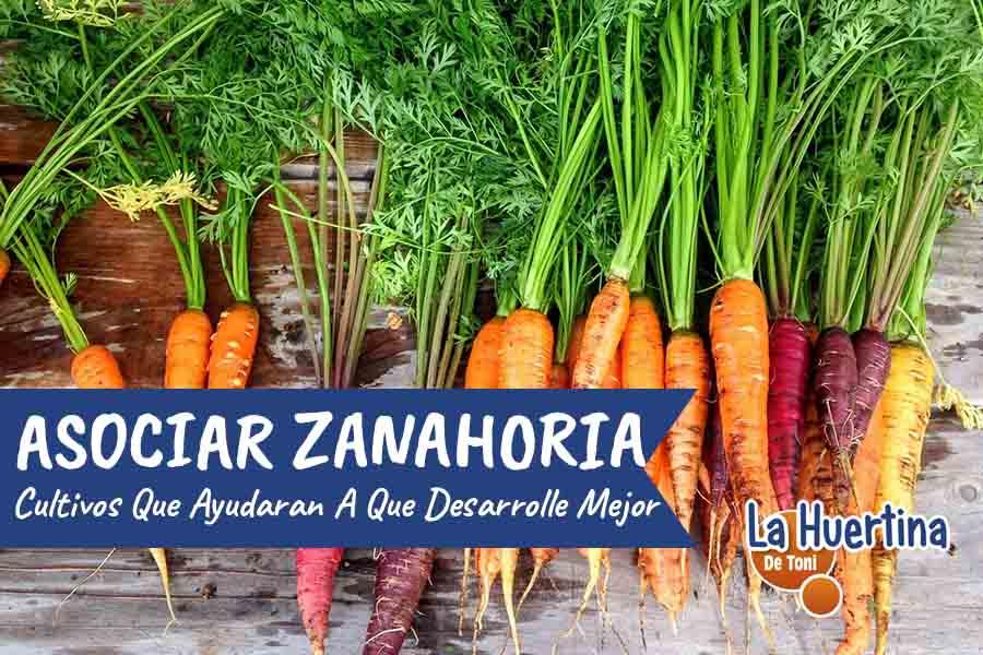 asociar zanahorias en el huerto