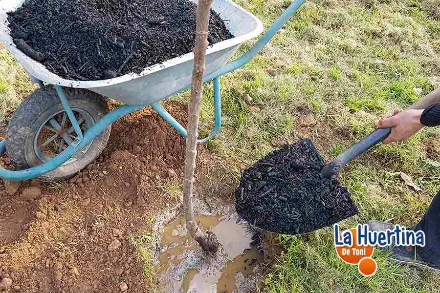 fertilizar con biochar frutal