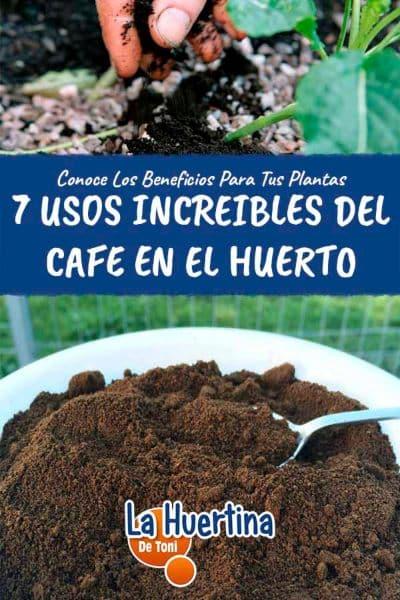 posos cafe plantas