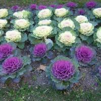 20 Plantas resistentes al frío