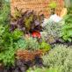5 Aromáticas Imprescindibles En Nuestro Huerto Ecologico